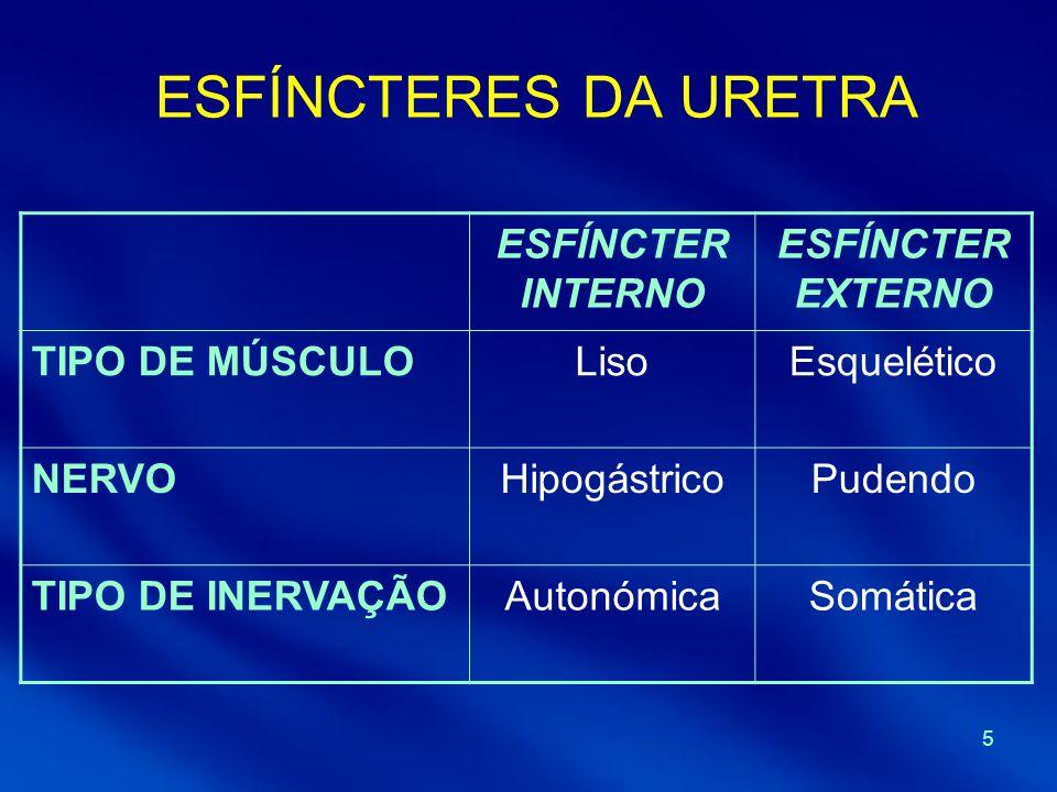 ESFÍNCTERES DA URETRA ESFÍNCTER INTERNO ESFÍNCTER EXTERNO