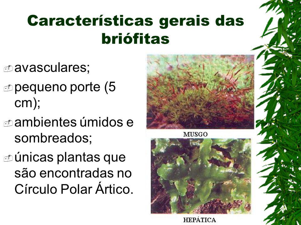 Características gerais das briófitas