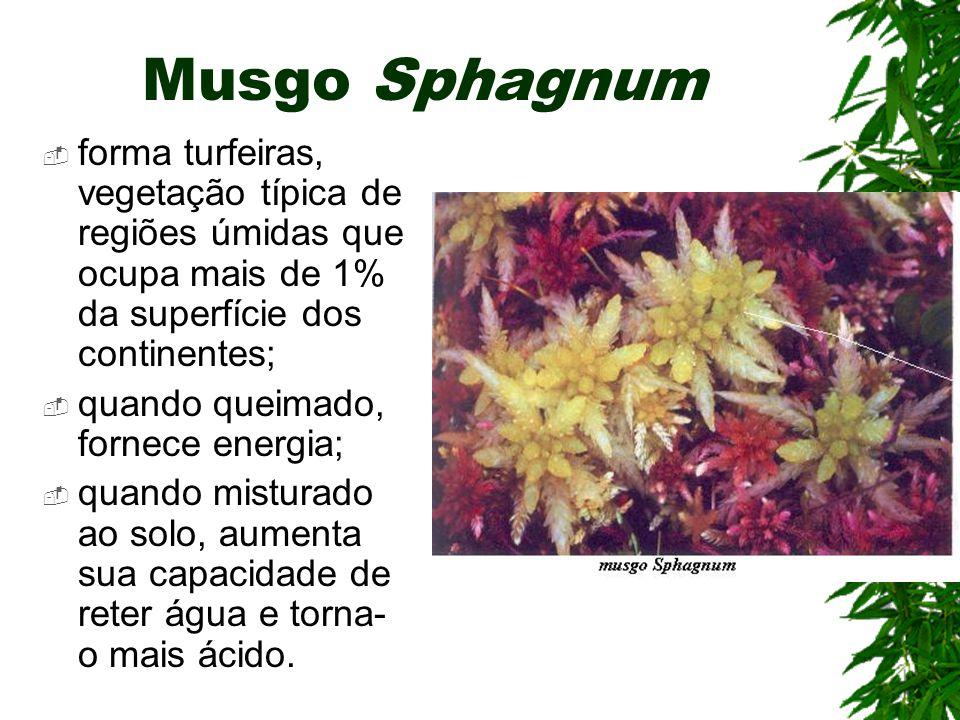 Musgo Sphagnum forma turfeiras, vegetação típica de regiões úmidas que ocupa mais de 1% da superfície dos continentes;