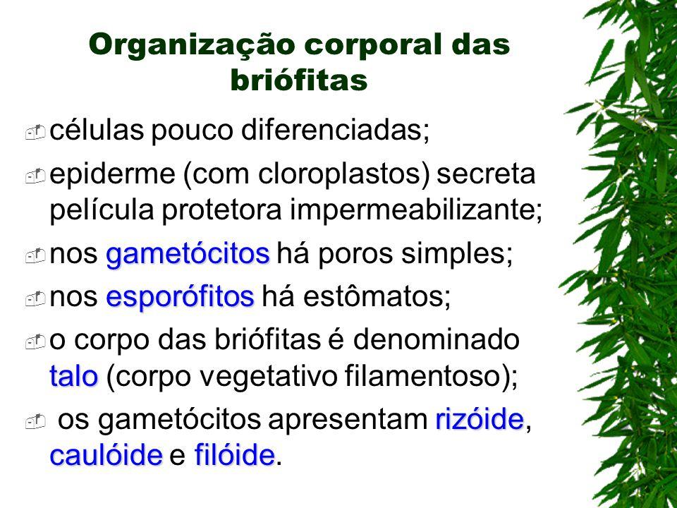 Organização corporal das briófitas