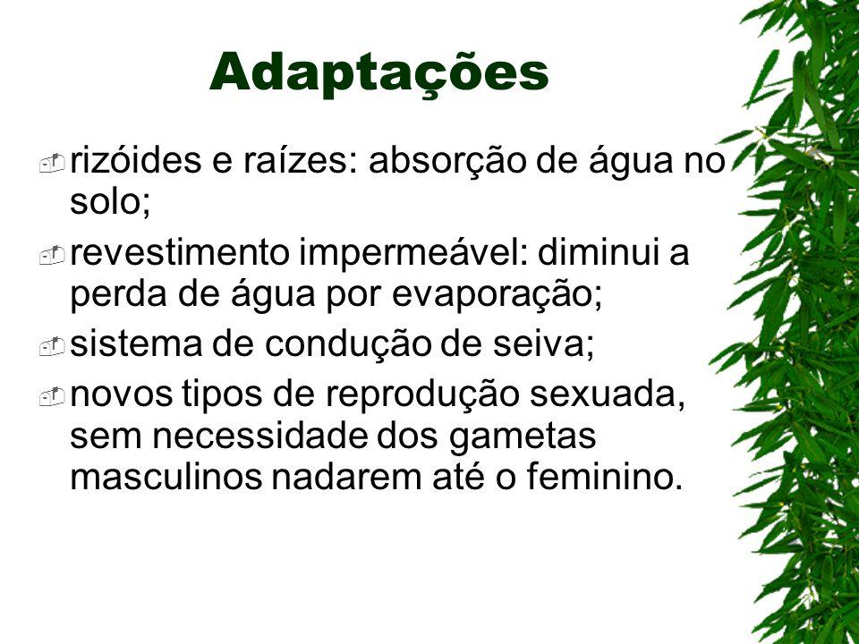 Adaptações rizóides e raízes: absorção de água no solo;