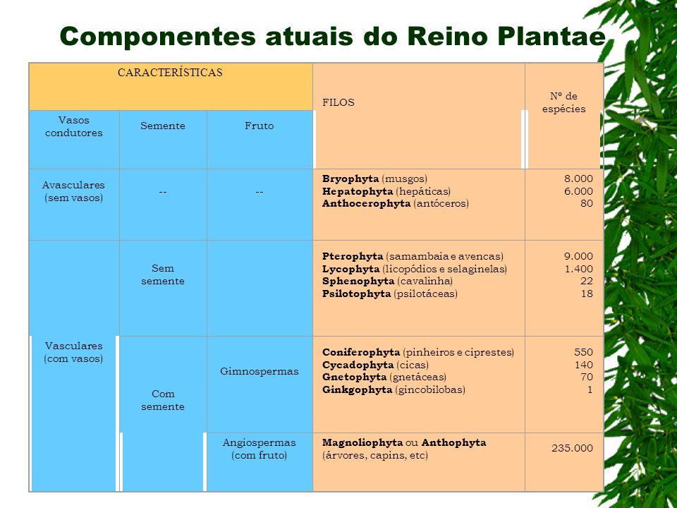 Componentes atuais do Reino Plantae