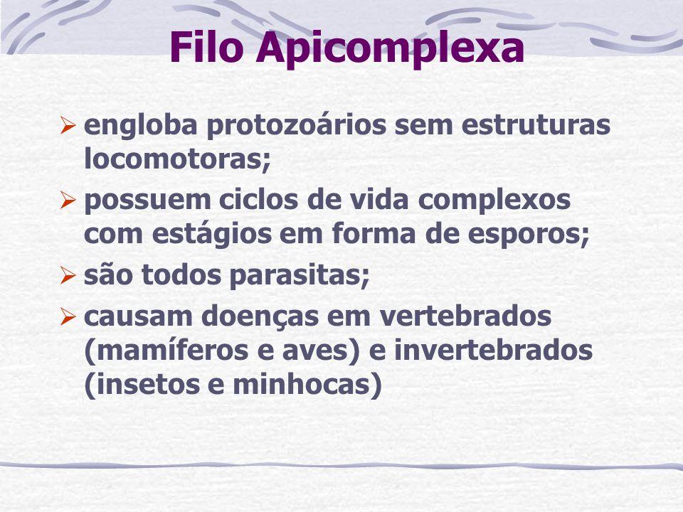 Filo Apicomplexa engloba protozoários sem estruturas locomotoras;