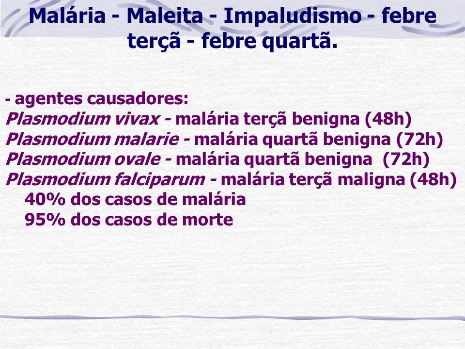 Malária - Maleita - Impaludismo - febre terçã - febre quartã.