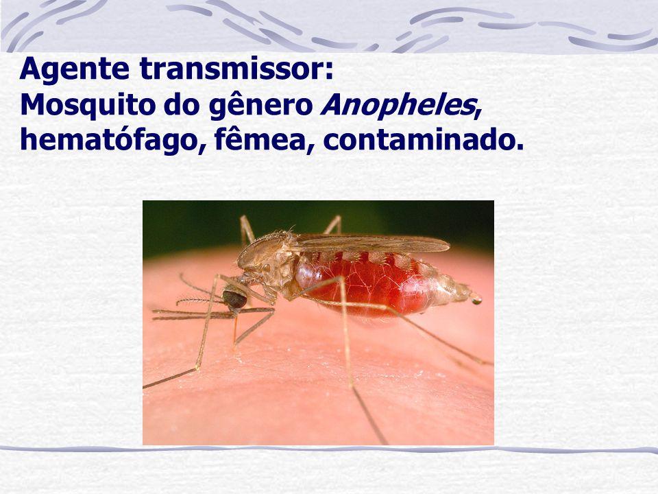 Agente transmissor: Mosquito do gênero Anopheles, hematófago, fêmea, contaminado.