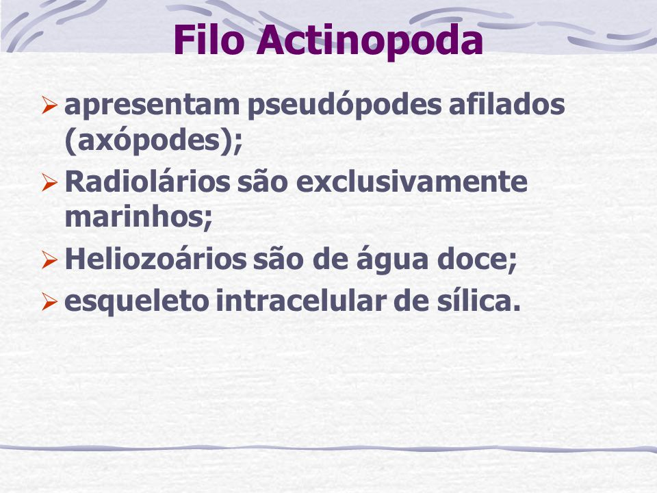 Filo Actinopoda apresentam pseudópodes afilados (axópodes);