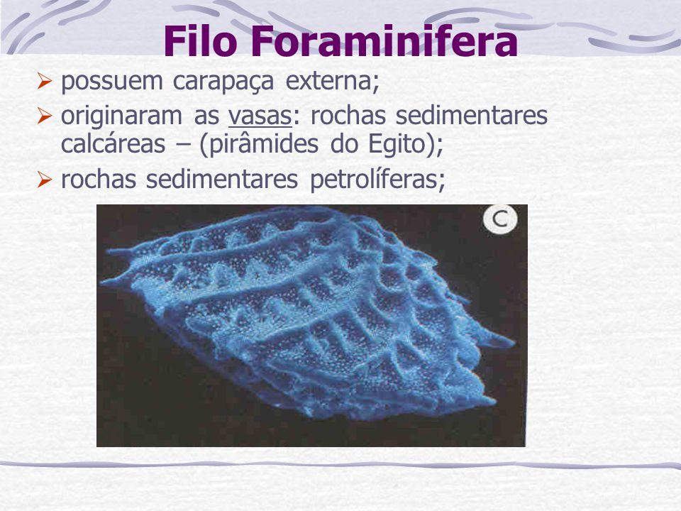 Filo Foraminifera possuem carapaça externa;