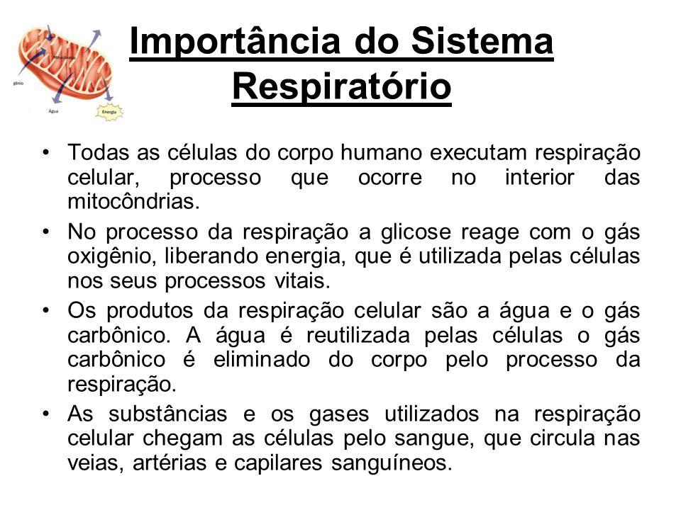 Importância do Sistema Respiratório