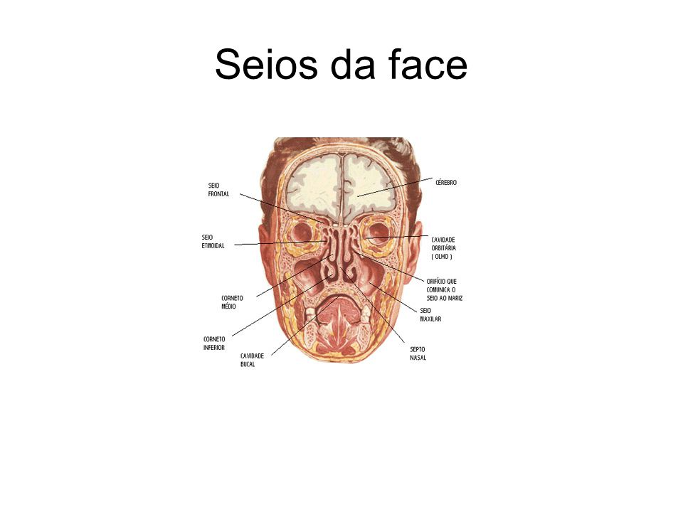 Seios da face