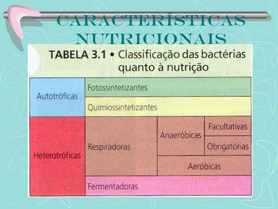 Características nutricionais