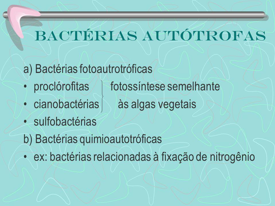 Bactérias autótrofas a) Bactérias fotoautrotróficas