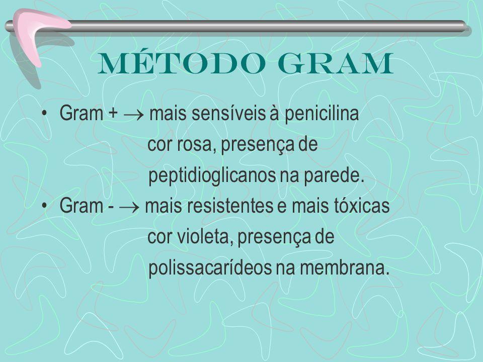 Método Gram Gram +  mais sensíveis à penicilina cor rosa, presença de