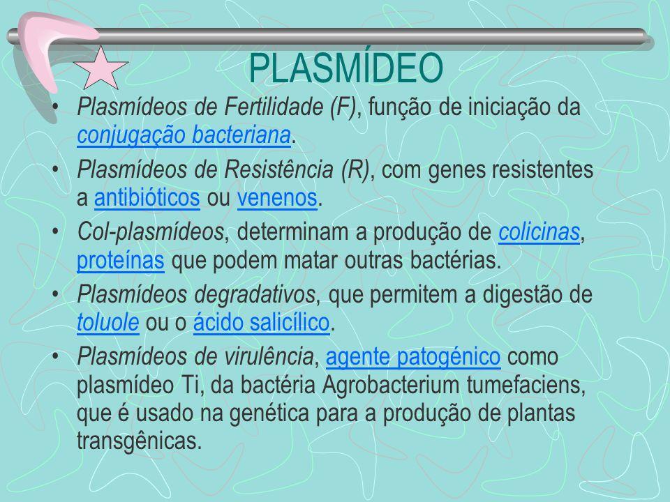 PLASMÍDEO Plasmídeos de Fertilidade (F), função de iniciação da conjugação bacteriana.