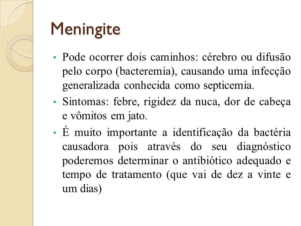 Meningite Pode ocorrer dois caminhos: cérebro ou difusão pelo corpo (bacteremia), causando uma infecção generalizada conhecida como septicemia.