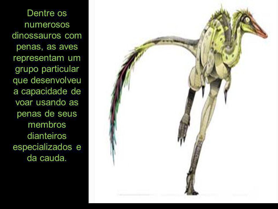 Dentre os numerosos dinossauros com penas, as aves representam um grupo particular que desenvolveu a capacidade de voar usando as penas de seus membros dianteiros especializados e da cauda.
