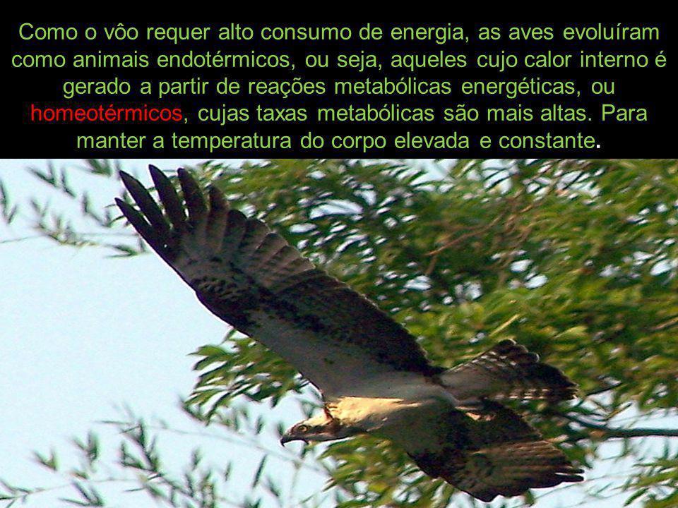 Como o vôo requer alto consumo de energia, as aves evoluíram como animais endotérmicos, ou seja, aqueles cujo calor interno é gerado a partir de reações metabólicas energéticas, ou homeotérmicos, cujas taxas metabólicas são mais altas.