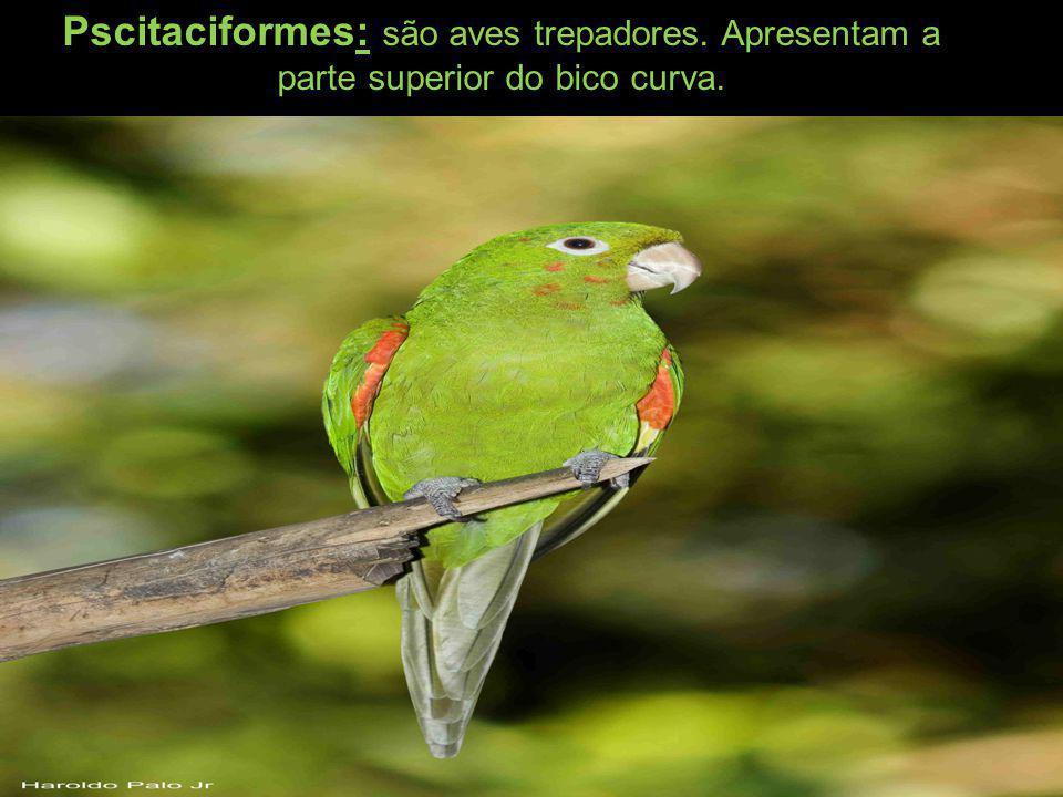 Pscitaciformes: são aves trepadores