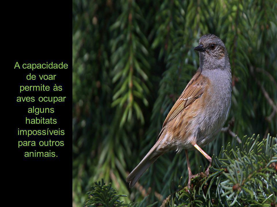 A capacidade de voar permite às aves ocupar alguns habitats impossíveis para outros animais.