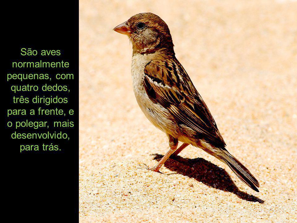 São aves normalmente pequenas, com quatro dedos, três dirigidos para a frente, e o polegar, mais desenvolvido, para trás.