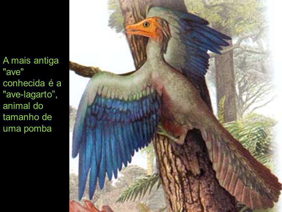 A mais antiga ave conhecida é a ave-lagarto , animal do tamanho de uma pomba