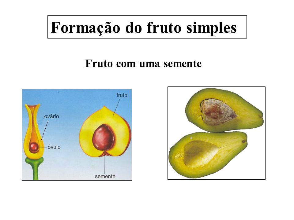 Formação do fruto simples
