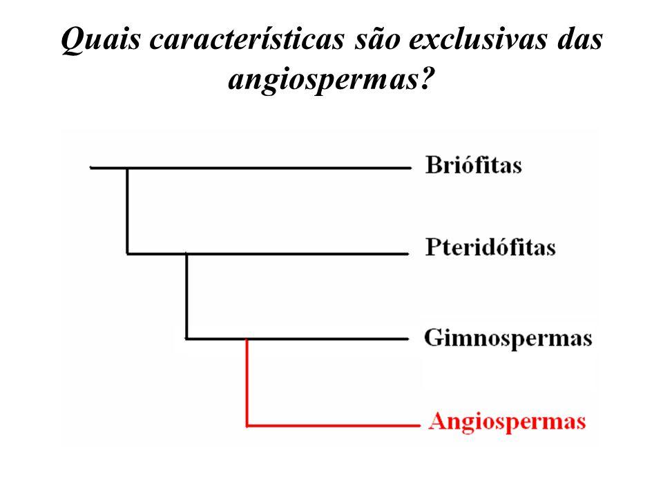 Quais características são exclusivas das angiospermas