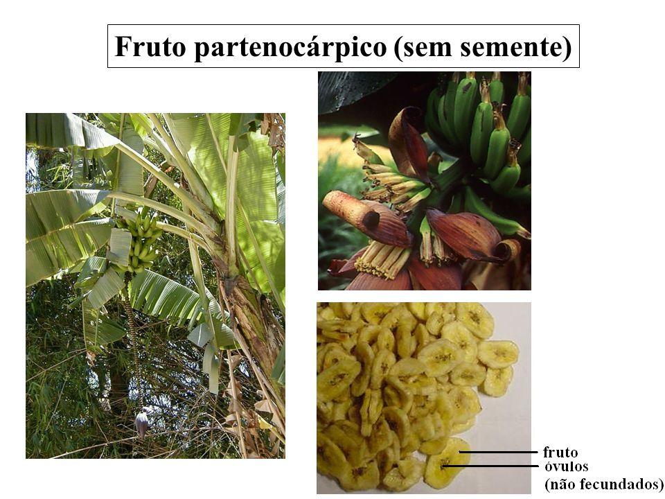 Fruto partenocárpico (sem semente)