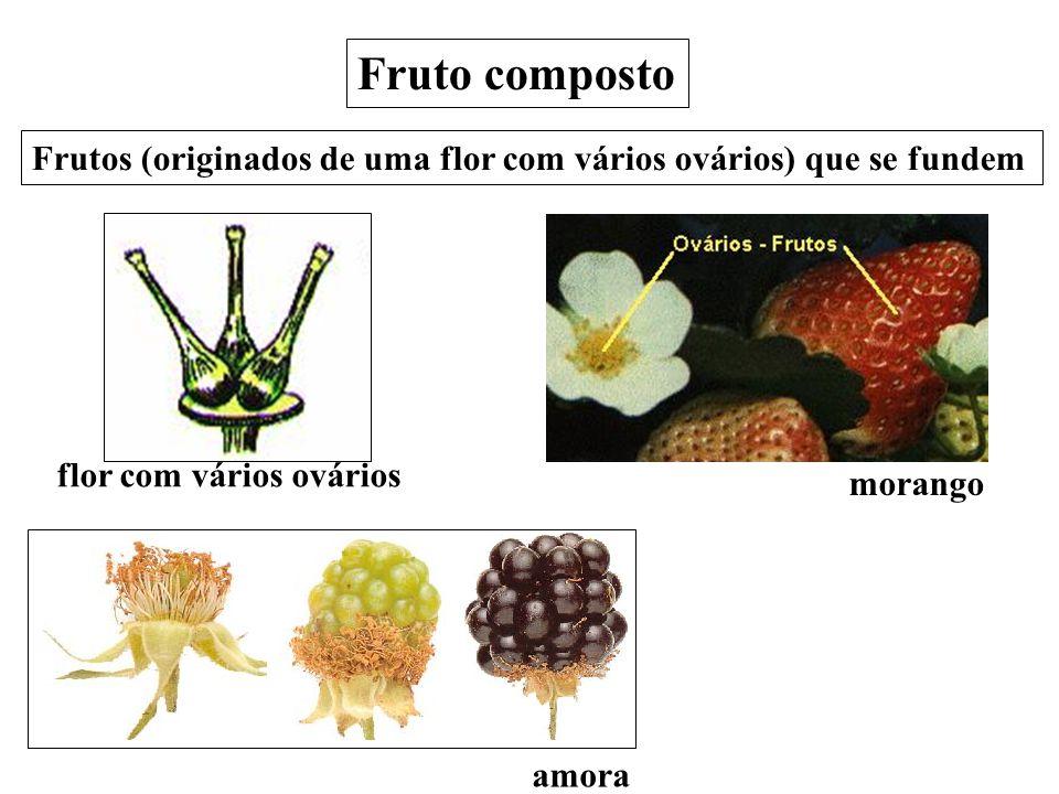 Fruto composto Frutos (originados de uma flor com vários ovários) que se fundem. flor com vários ovários.