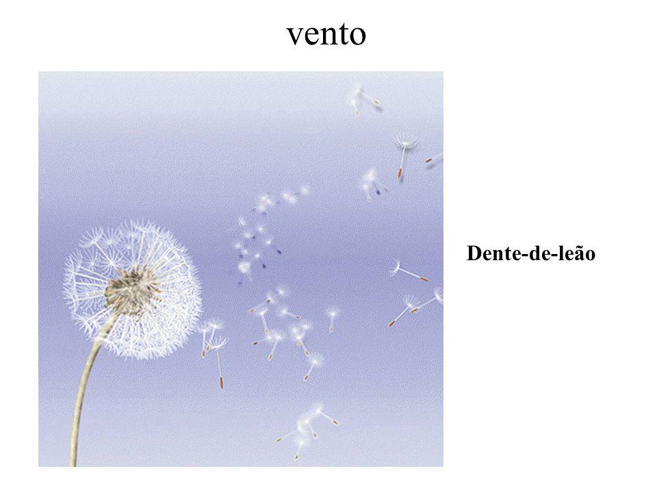 vento Dente-de-leão