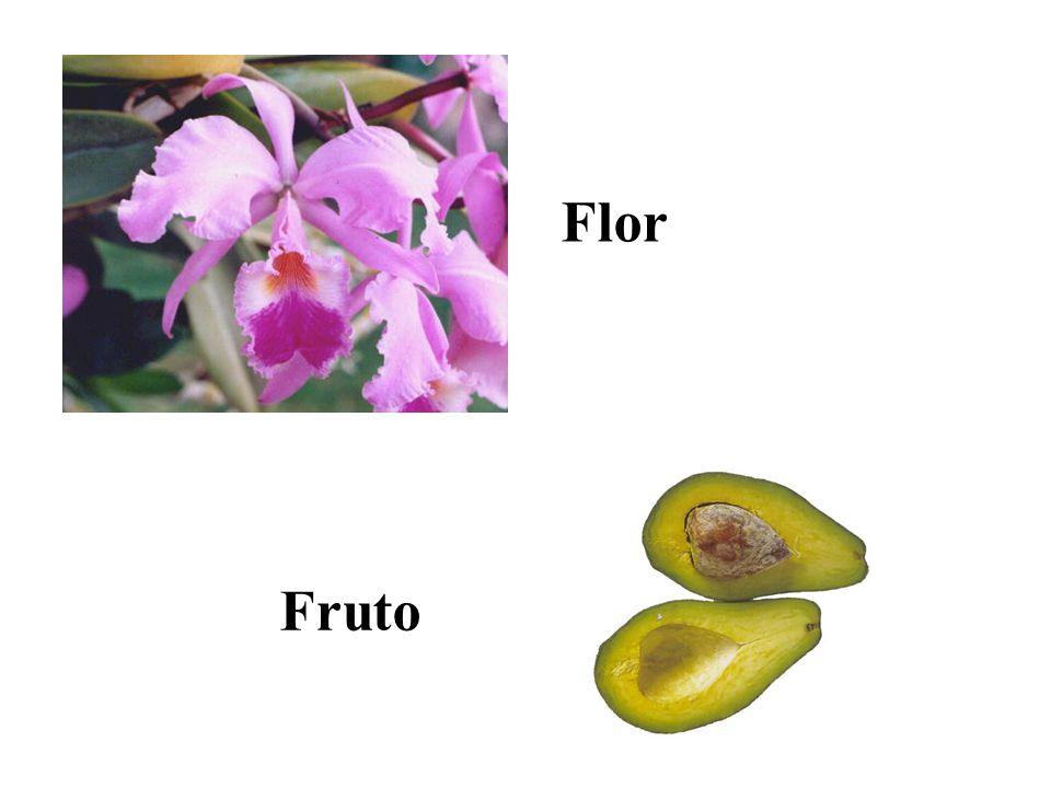 Flor orquídea Fruto
