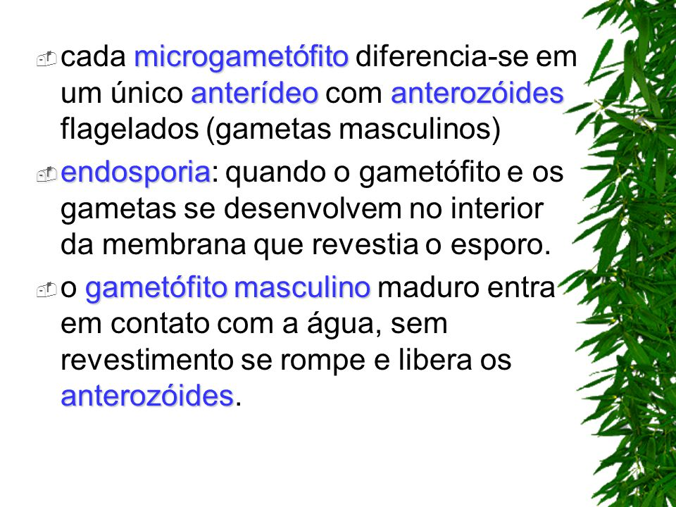 cada microgametófito diferencia-se em um único anterídeo com anterozóides flagelados (gametas masculinos)