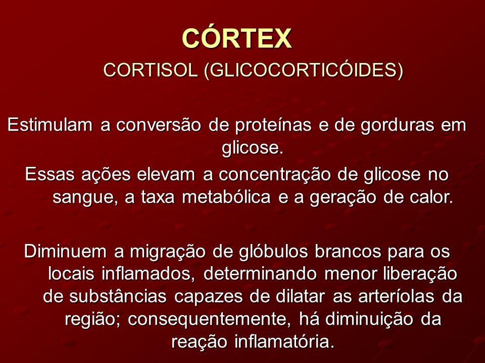 CÓRTEX CORTISOL (GLICOCORTICÓIDES)