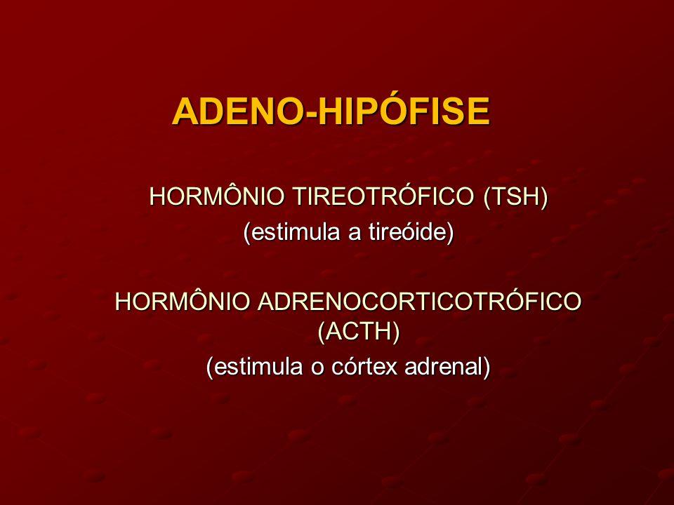 ADENO-HIPÓFISE HORMÔNIO TIREOTRÓFICO (TSH) (estimula a tireóide)