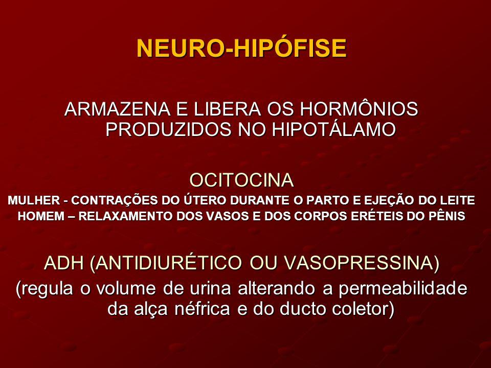 NEURO-HIPÓFISE ARMAZENA E LIBERA OS HORMÔNIOS PRODUZIDOS NO HIPOTÁLAMO