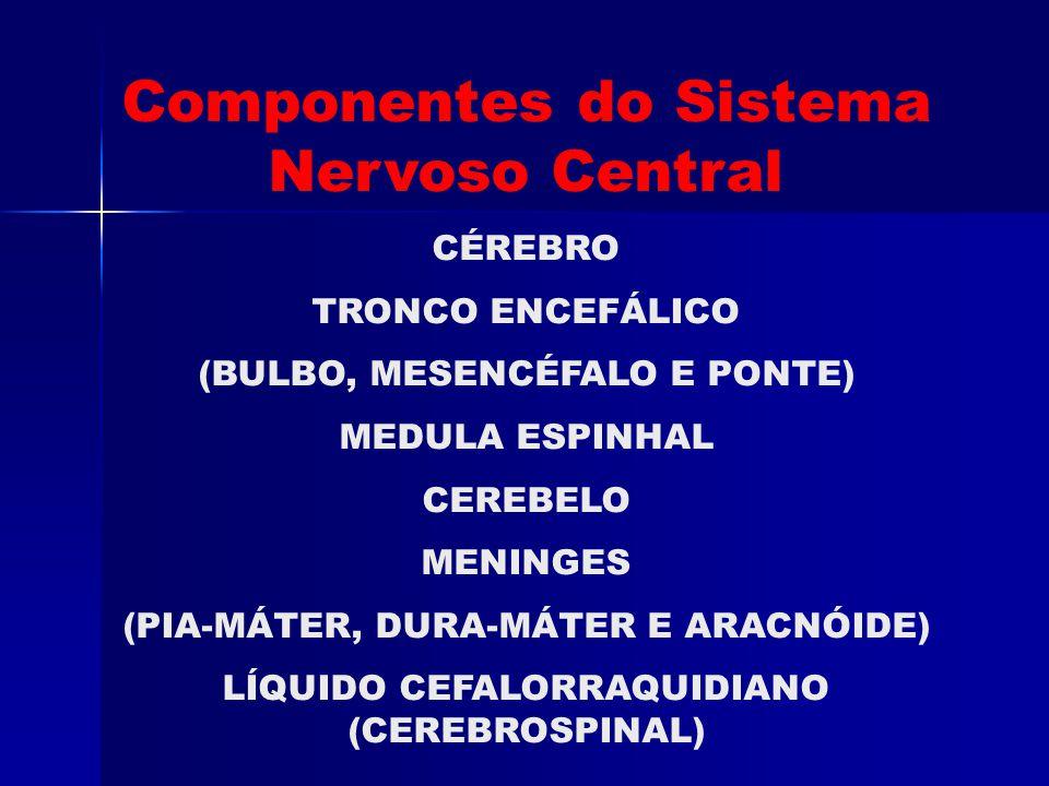 Componentes do Sistema Nervoso Central