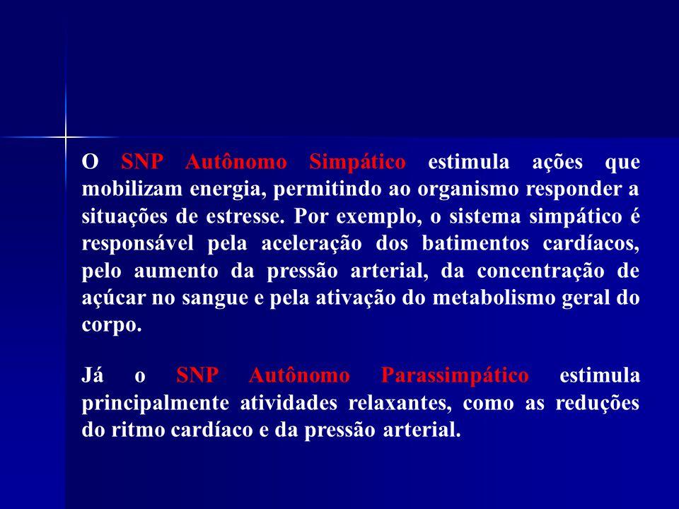 O SNP Autônomo Simpático estimula ações que mobilizam energia, permitindo ao organismo responder a situações de estresse. Por exemplo, o sistema simpático é responsável pela aceleração dos batimentos cardíacos, pelo aumento da pressão arterial, da concentração de açúcar no sangue e pela ativação do metabolismo geral do corpo.