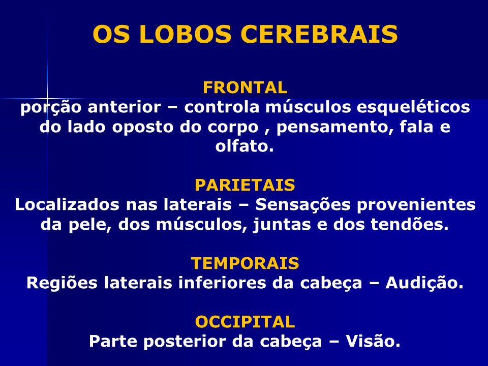 OS LOBOS CEREBRAIS FRONTAL