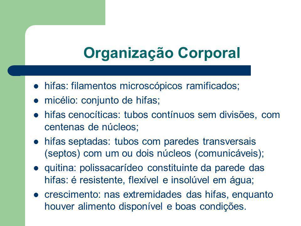 Organização Corporal hifas: filamentos microscópicos ramificados;