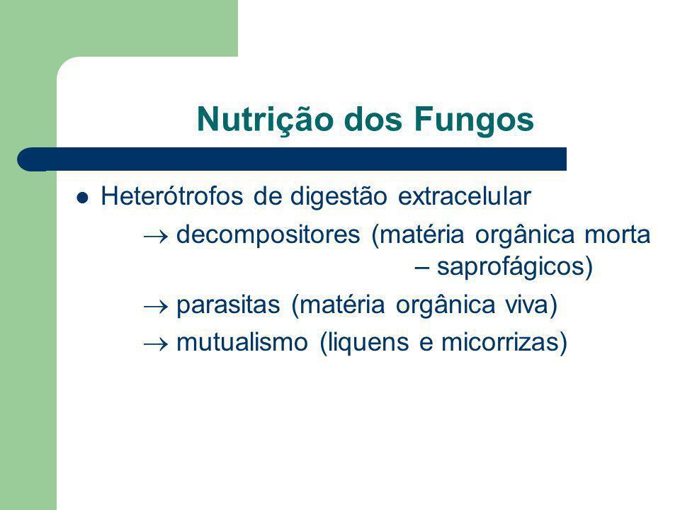Nutrição dos Fungos Heterótrofos de digestão extracelular