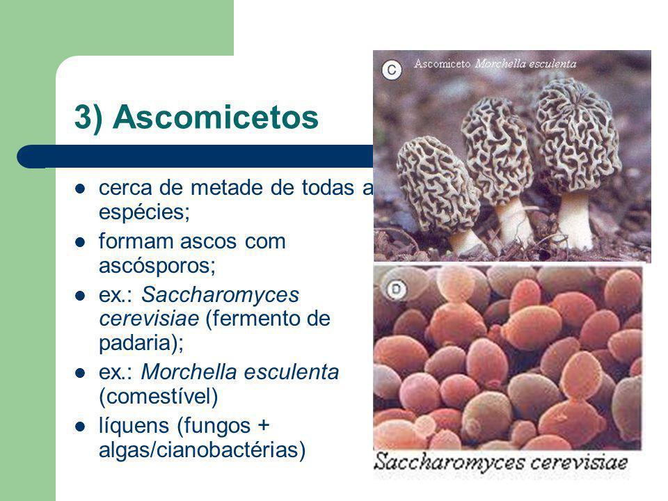 3) Ascomicetos cerca de metade de todas as espécies;