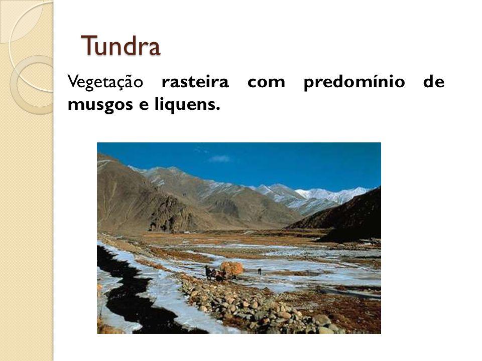 Tundra Vegetação rasteira com predomínio de musgos e liquens.