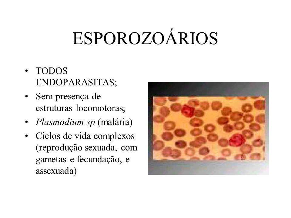 ESPOROZOÁRIOS TODOS ENDOPARASITAS;