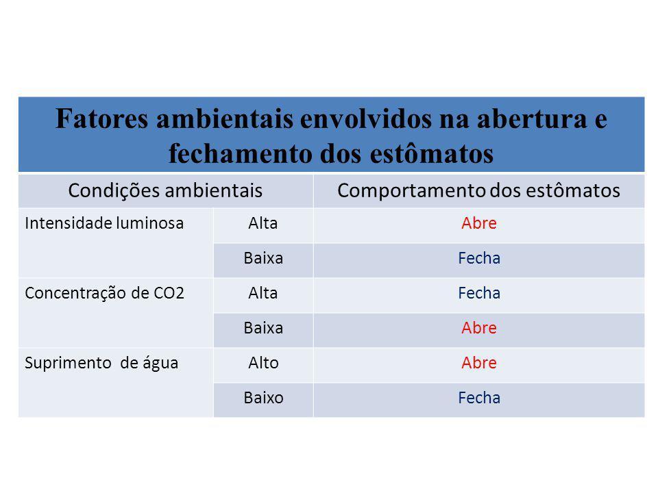 Fatores ambientais envolvidos na abertura e fechamento dos estômatos