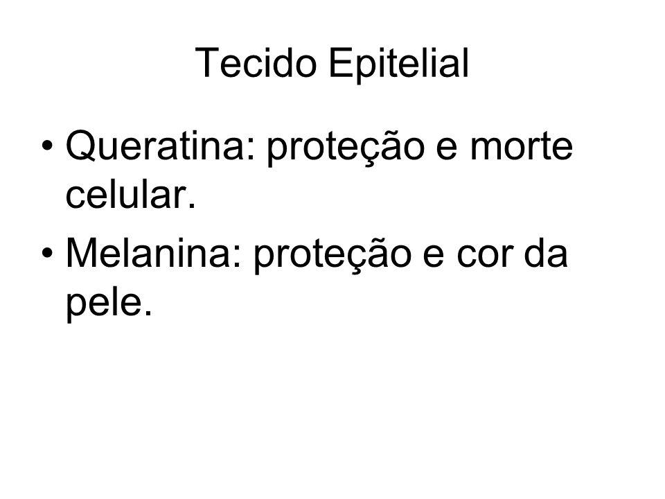 Tecido Epitelial Queratina: proteção e morte celular. Melanina: proteção e cor da pele.