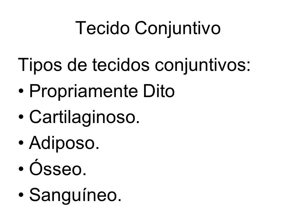 Tecido Conjuntivo Tipos de tecidos conjuntivos: Propriamente Dito. Cartilaginoso. Adiposo. Ósseo.