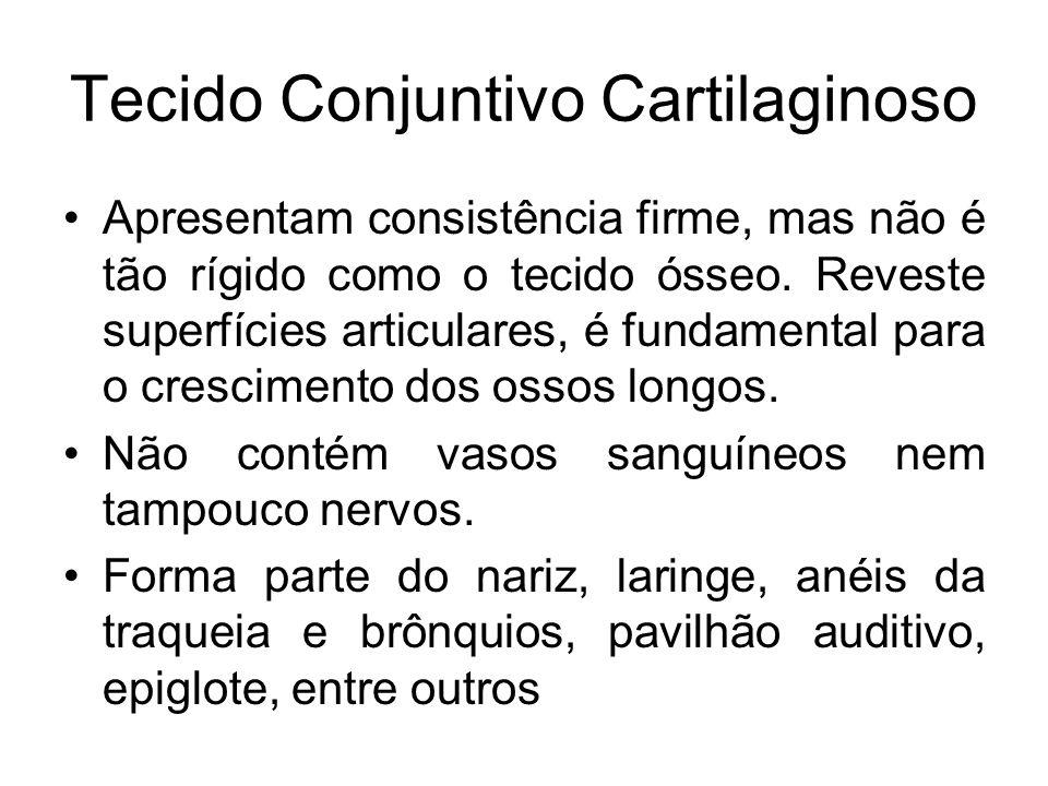Tecido Conjuntivo Cartilaginoso