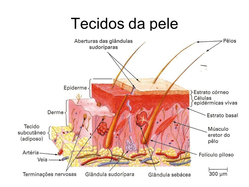 Tecidos da pele