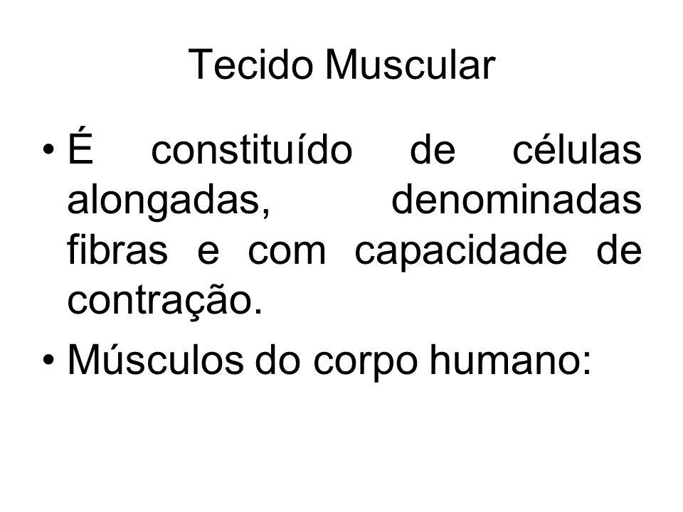 Tecido Muscular É constituído de células alongadas, denominadas fibras e com capacidade de contração.