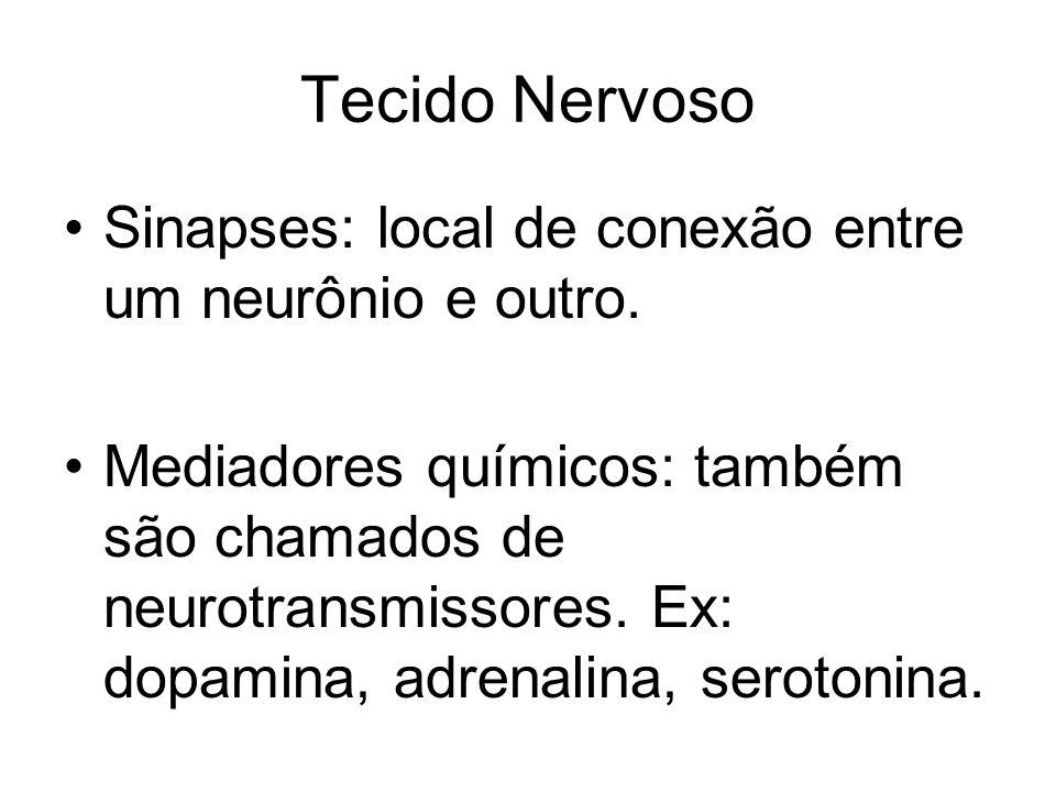 Tecido Nervoso Sinapses: local de conexão entre um neurônio e outro.