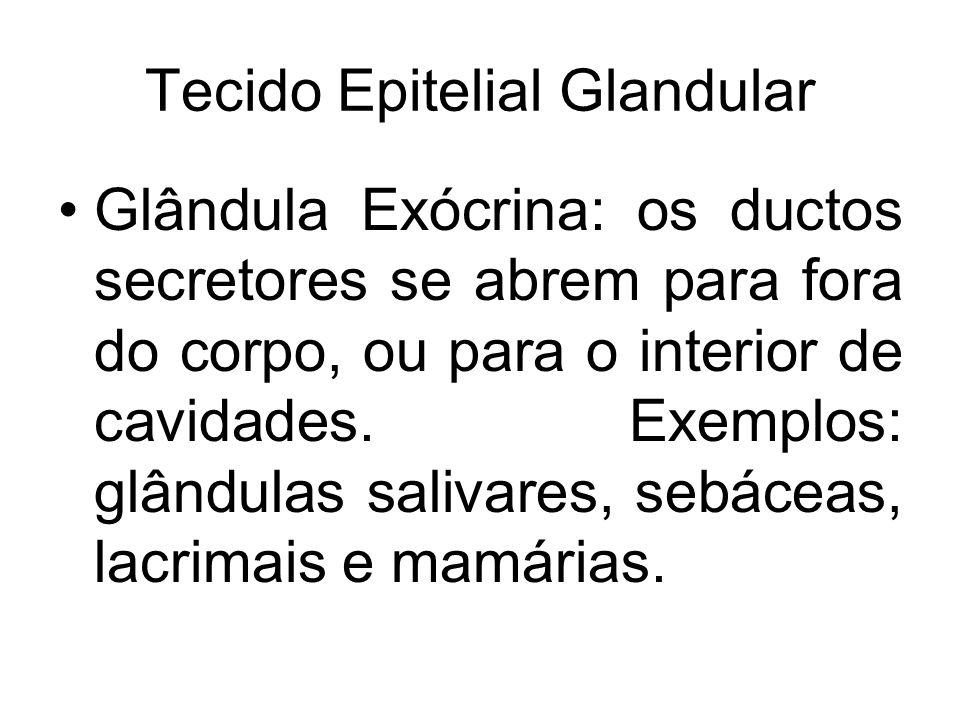 Tecido Epitelial Glandular
